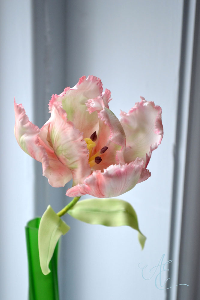 sugar pallot tulip