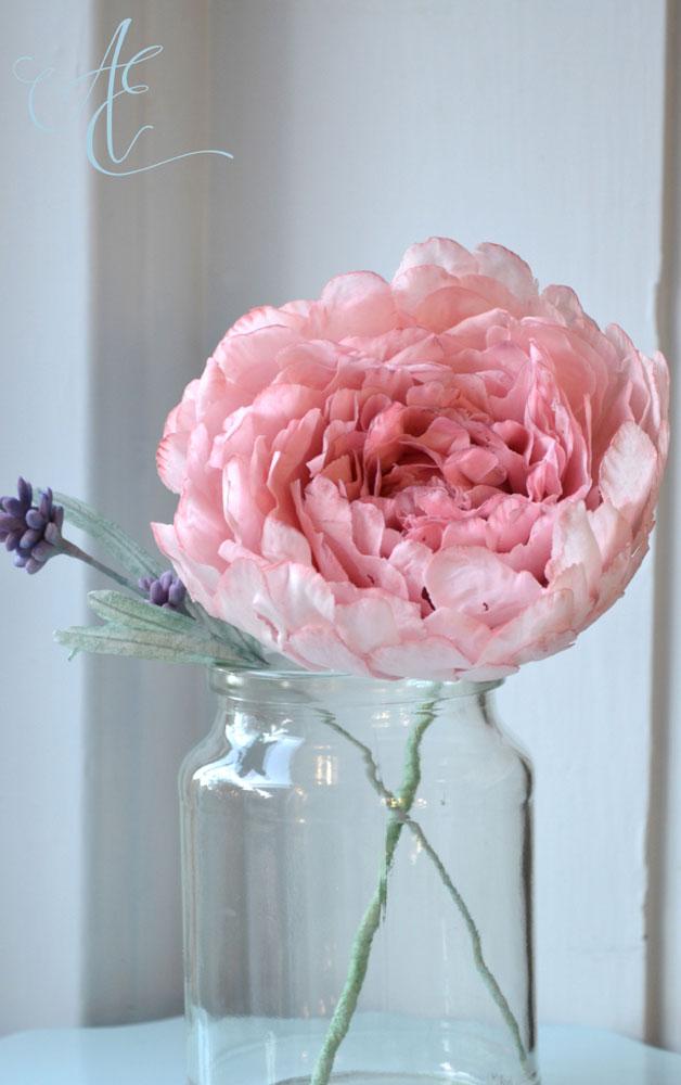 dusky pink peony flower