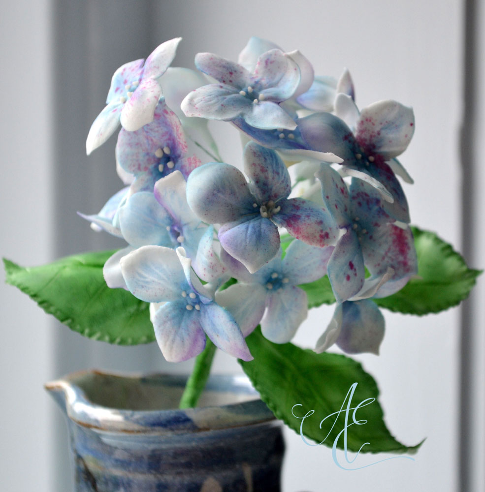 Blue sugar hydrangea flowers