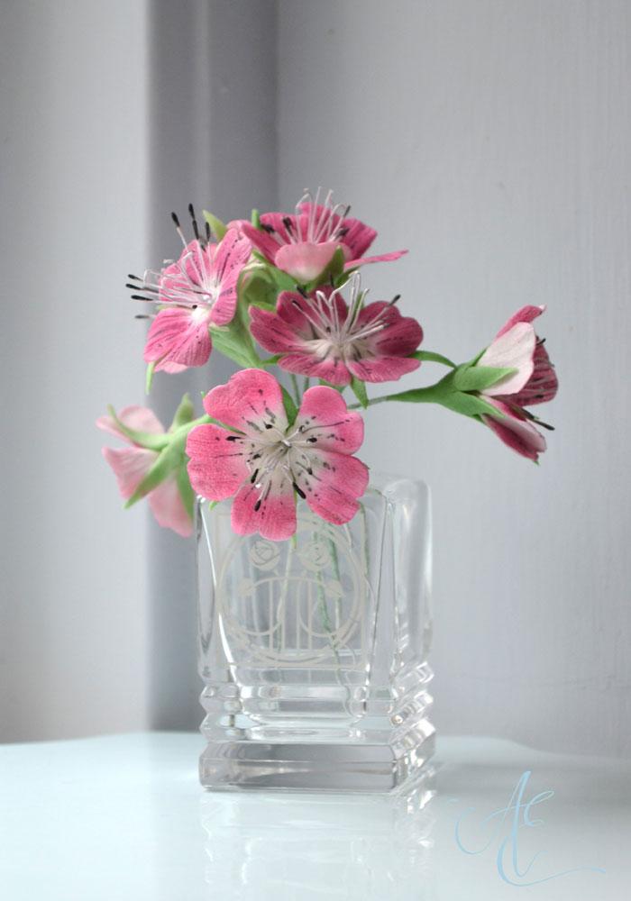 Pink sugar corncockle flowers