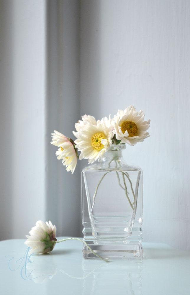 Sugar daisies