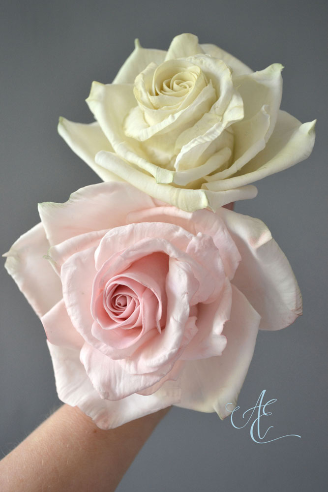 pink and ivory large sugar roses