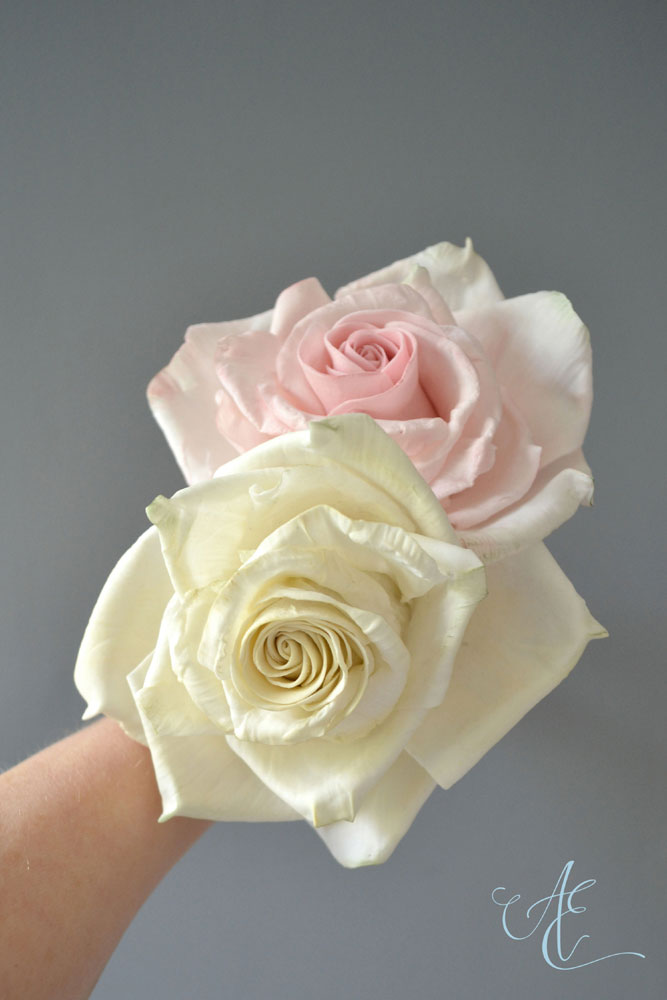 large ivory and pink sugar roses