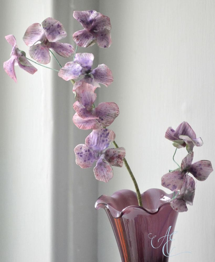 lilac sugar hydrangea blossoms