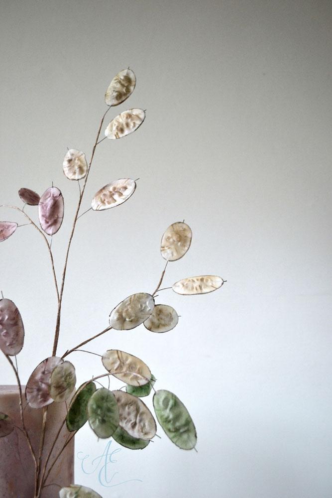 sugar lunaria seedpods