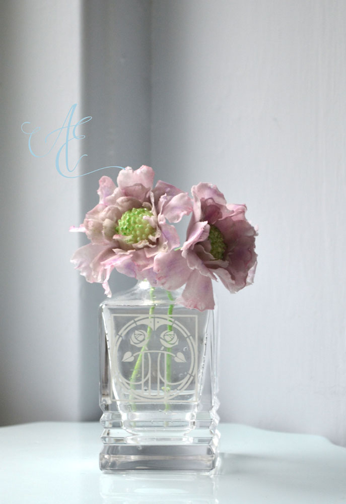 sugar scabious flower