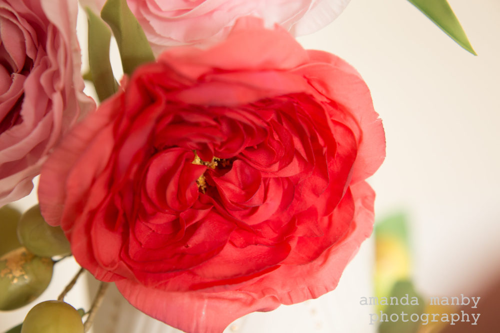 red sugar damask rose
