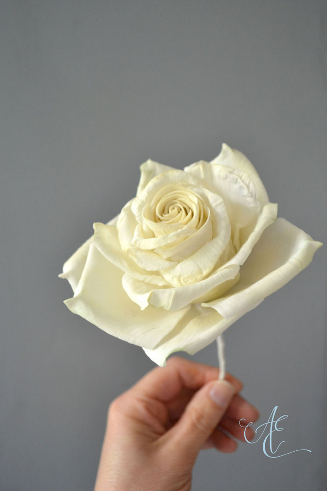 large sugar ivory rose