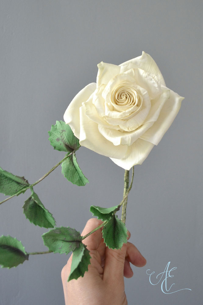 ivory sugar rose and leaves